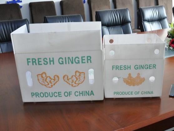 中空板蔬菜出口箱